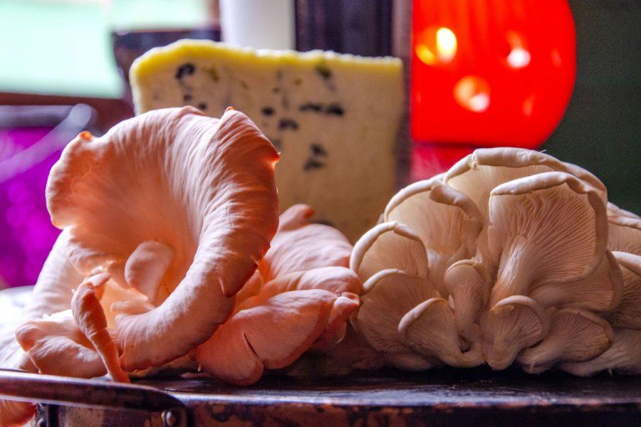 cogumelo-bistro-novas-2 (18)