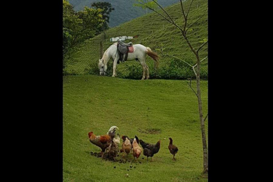 fazenda-pedra-selada-novas (7)