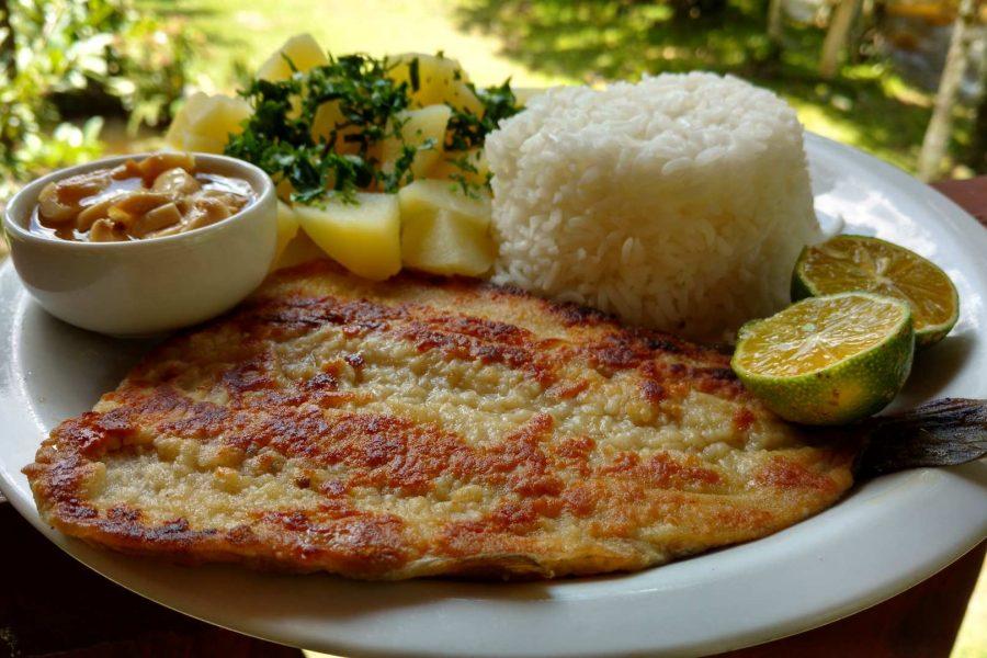 truta-da-floresta-restaurante-local (50)